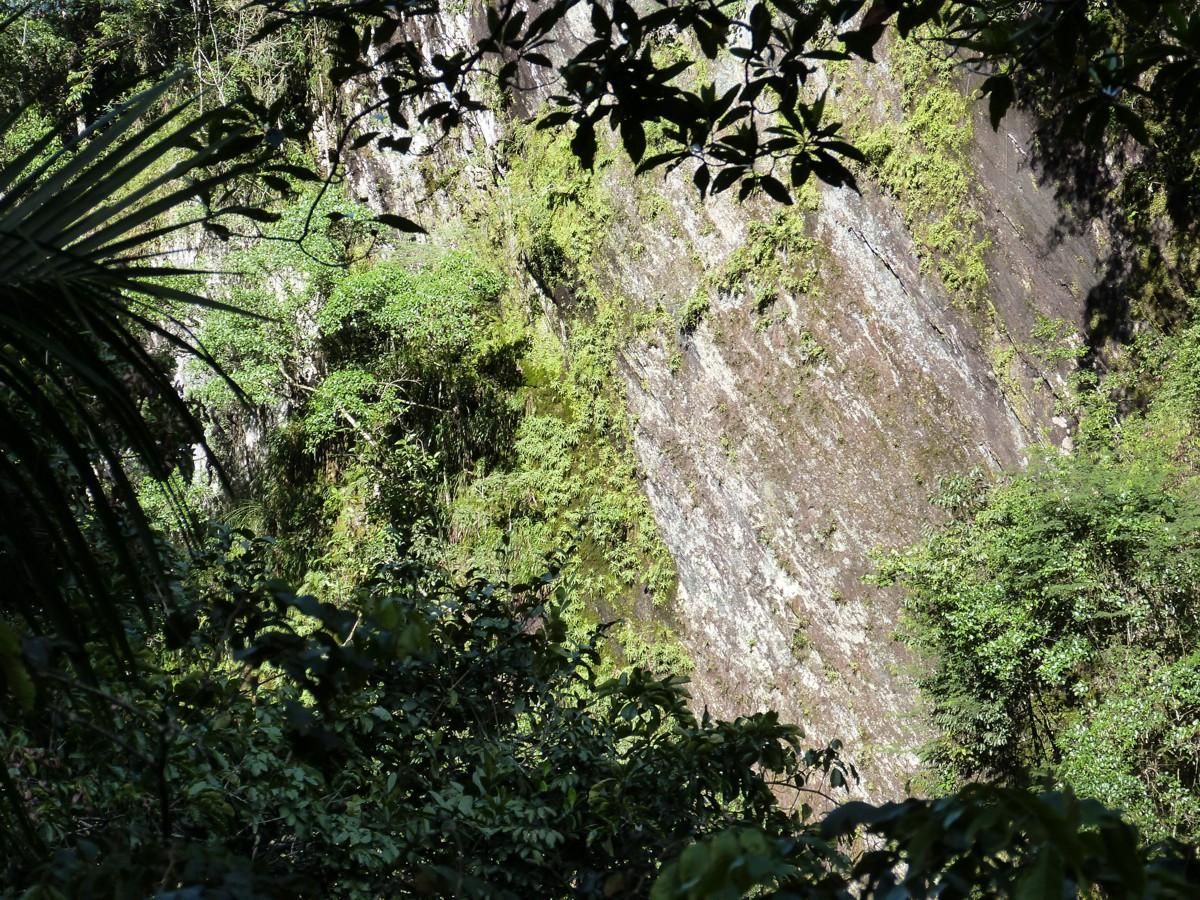 Trekking in Alta Selva