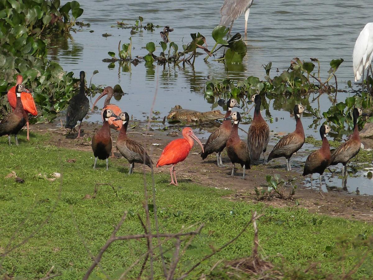 Venezuela Urwald, Tiere, Tafelberge und Indianer